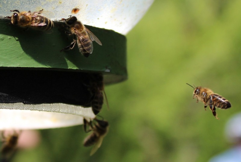 Obilježen Svjetski dan pčela 2018