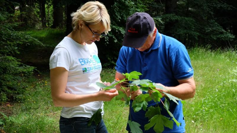 Preliminarni izvidi lisnih uši kao prekursora pčelinje paše u šumama Gorskoga Kotara i Hrvatskoga primorja
