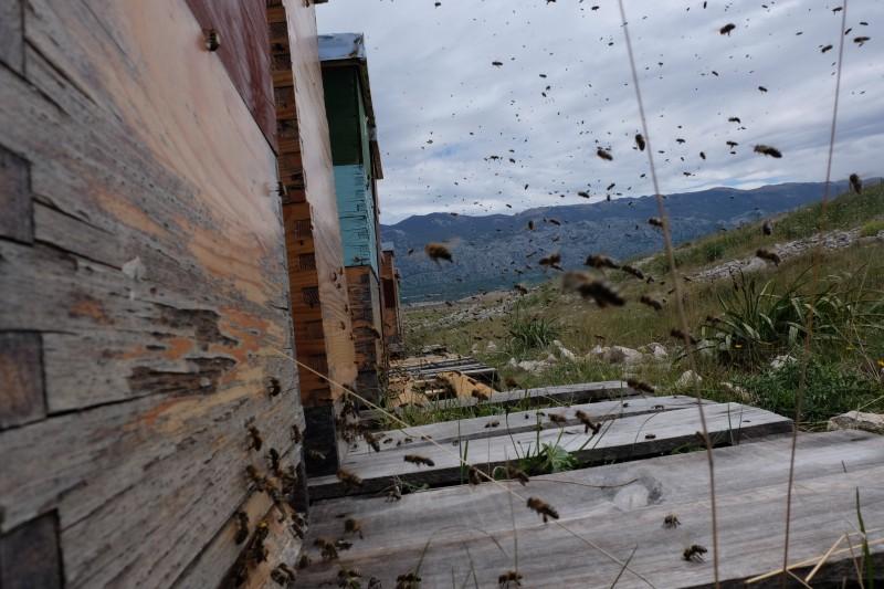 Škola pčelarstva u organizaciji Pčelarske udruge Matulji i Udruge pčelara Kastav
